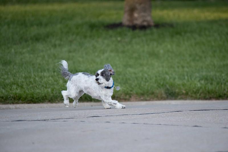 LuLu - Brady - Cooper Play Friends (40 of 109).jpg