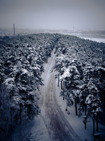 tampere forest view2.jpg