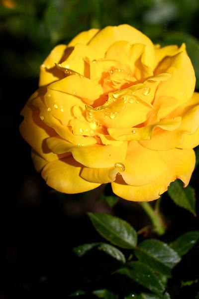 Portland International Rose Test Garden  2215.jpg