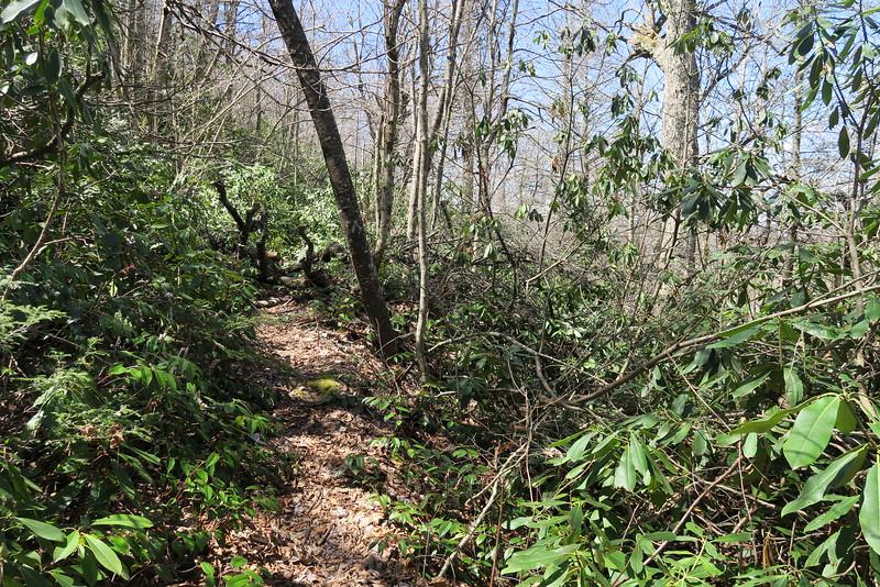 High Bethel Trail - 4,220'