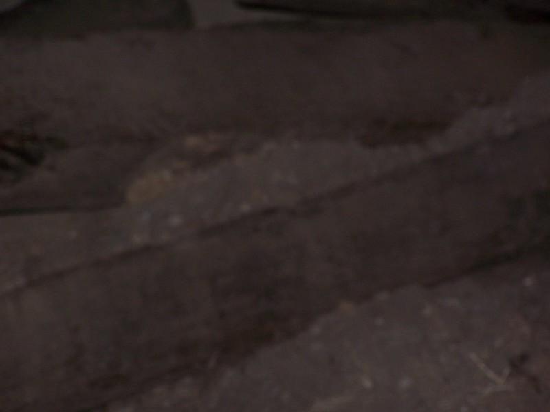 050619-NotACornfield-Scars006.JPG