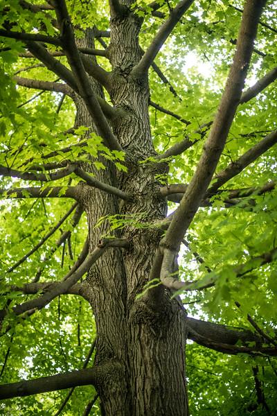 nature –Trees