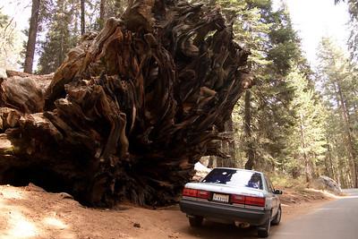 Sequoia Nat. Park, CA (Nov 2009)