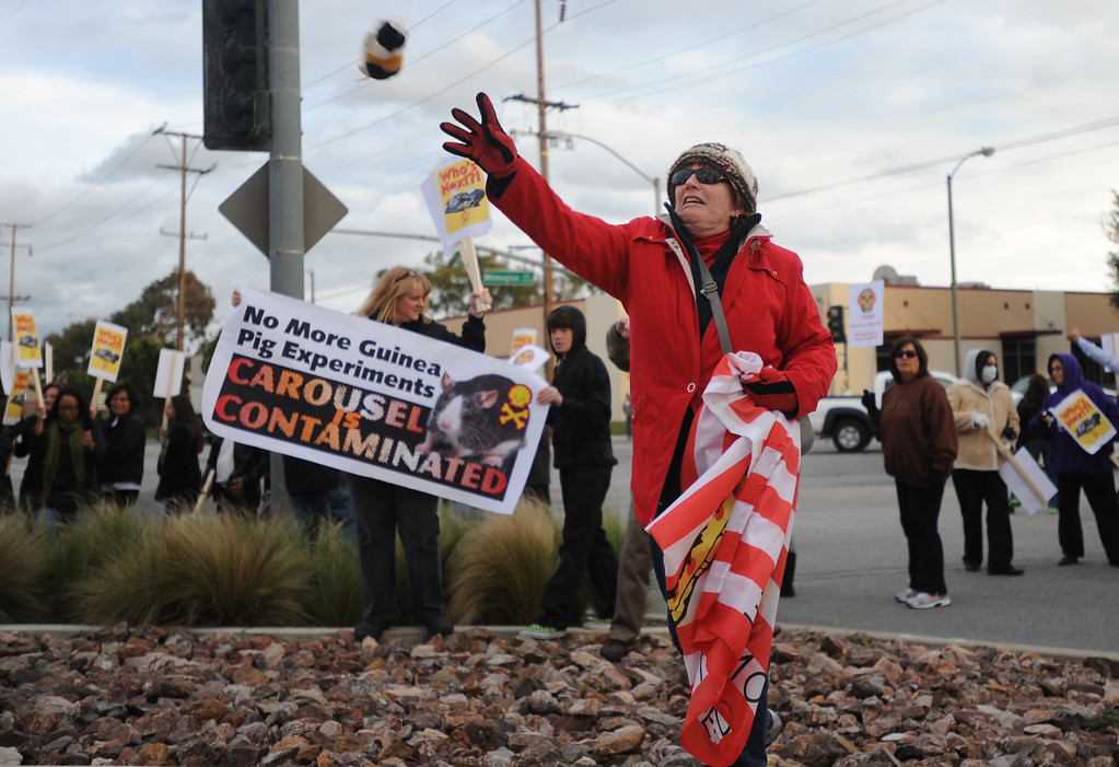 . Residents of the Carousel Tract neighborhood in Carson staged a protest against Shell Oil Friday by marching with signs from Dolphin Park to a Shell facility on Wilmington Avenue.  Linda Ayers tosses a stuffed guinea pig toy towards the facility. The guinea pig represents how the resident feel Shell treats them. 20130308 Photo by Steve McCrank / Staff Photographer