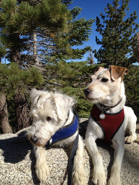 10/27/12 I took the boys on a hike up in Angeles Forest.