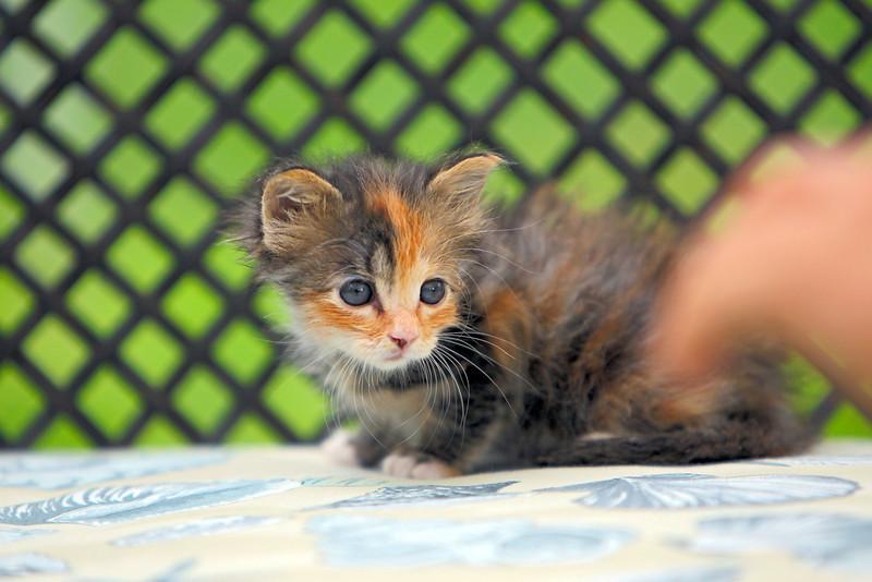 kittens_002-1.jpg