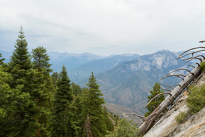 Sequoia/King's Canyon NP 2014