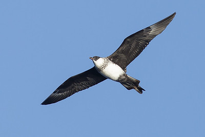 2014 March 15 Southport Pelagic