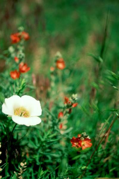 amh FLOWERS (1308).jpg
