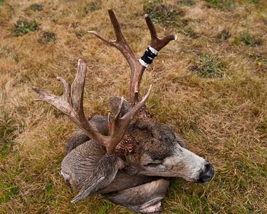 Mason's Buck 2011