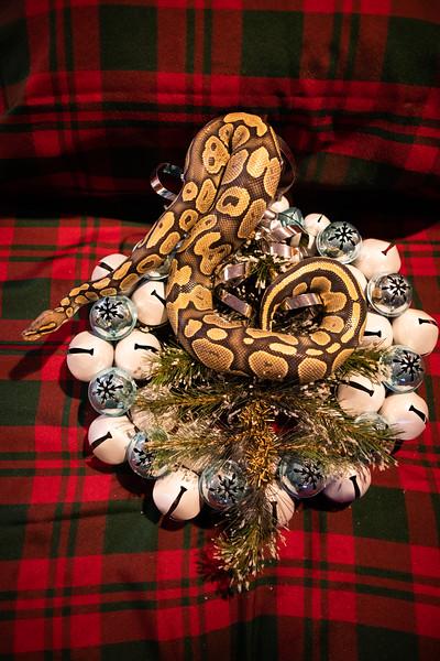 ChristmasSnakes19_0022.jpg