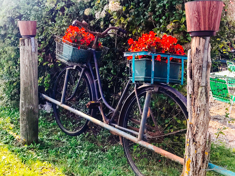 Bicycle flower holder