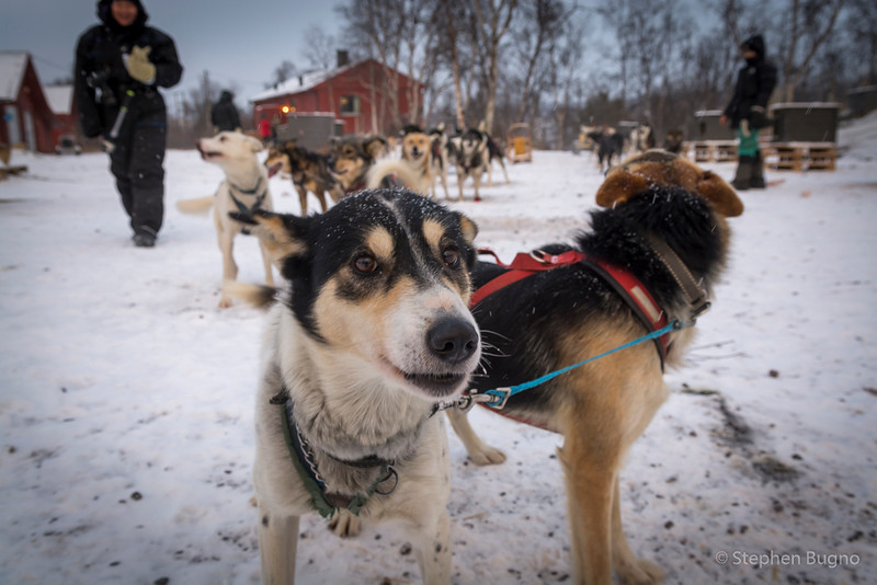 Dog Mushing-9662.jpg