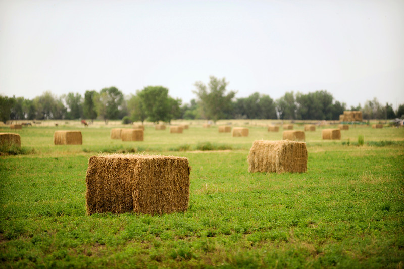 2011/8/18 – Just out for a drive when I spotted these very large bails of hay. It had just rained a little which put more than normal humidity into the air and made the shot a little dreamy.