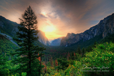 Yosemite & King's Canyon