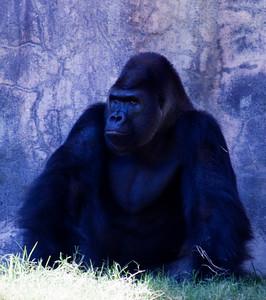 FT. Worth Zoo