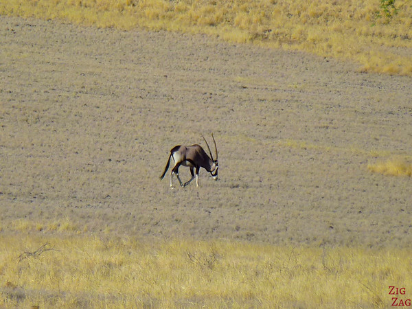 Road trip through South Namibia: spotting oryx