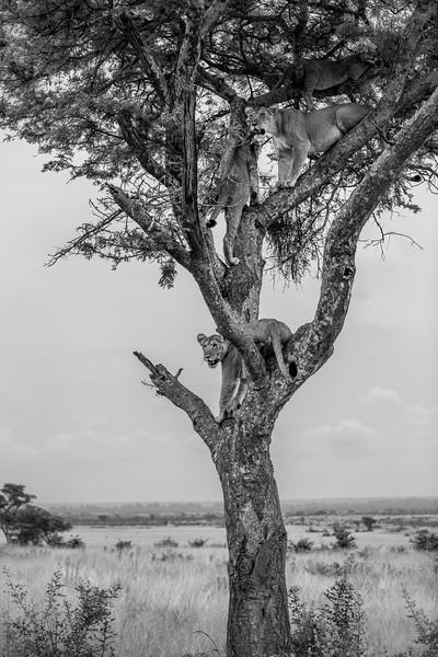 Uganda_T_QE-2015.jpg