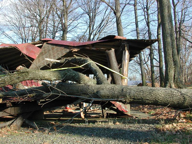 ...tree go BOOM!!!