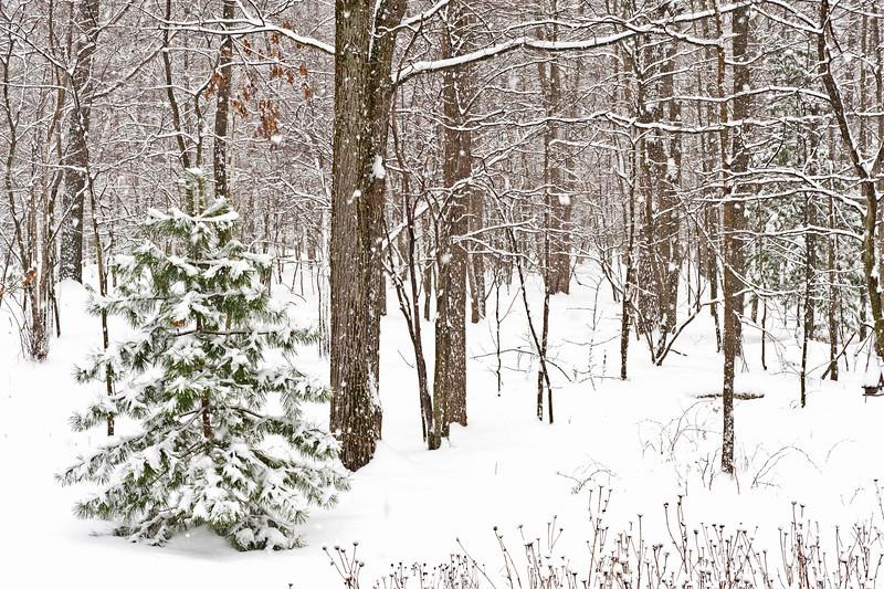 20131227 New Snow-6939 v3.jpg