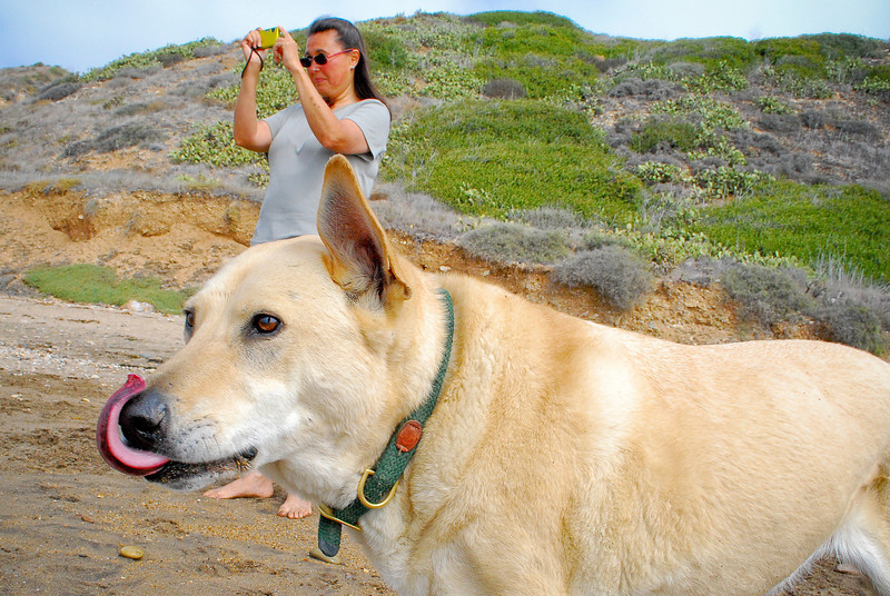 dogs_beach-057.jpg