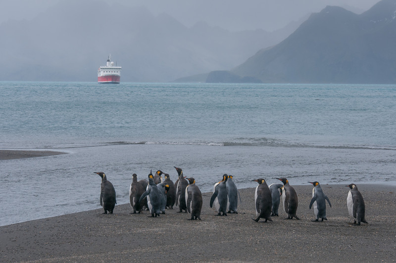Moltke Harbor, South Georgia Island