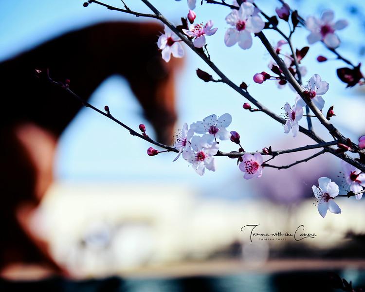 GSD 19 Blossoms 966.jpg