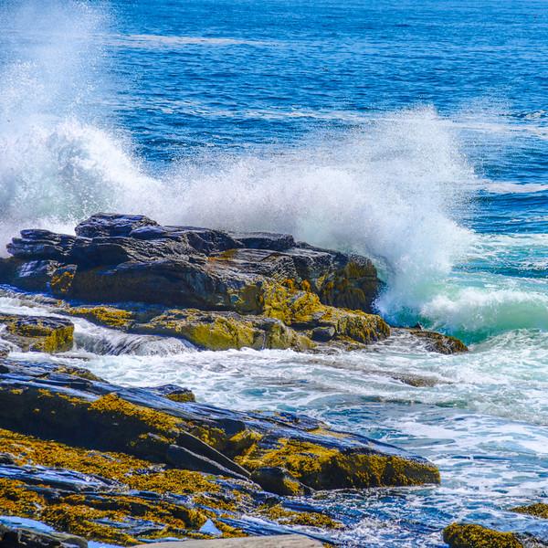 Maine Coast 107