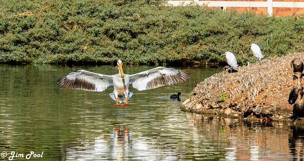 Santee Lakes 12-20-17