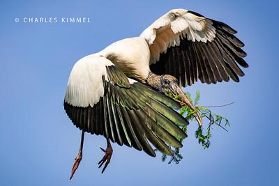 Storks: 2019