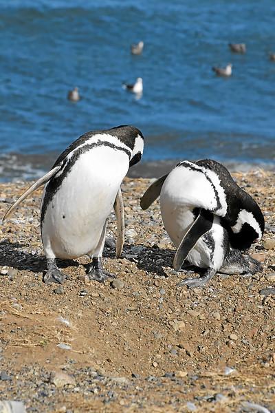 Penguin_Colony_081.jpg