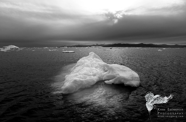 Greenland 2014