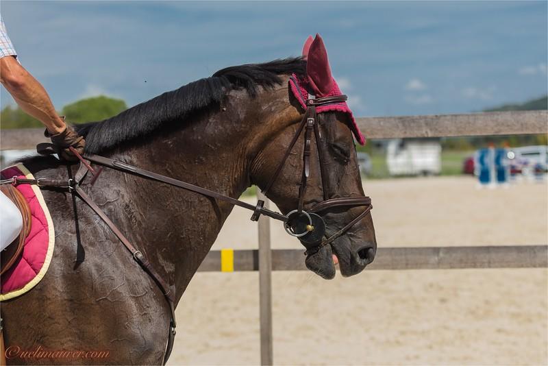2017-07-07 Pferdesporttage Birkenhof -2382.jpg