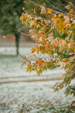 11.16.2014 - Rare snowfall in fall with colorful leaves