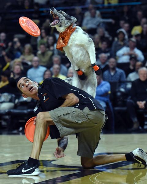 Frisbee dogs 2016-35.jpg