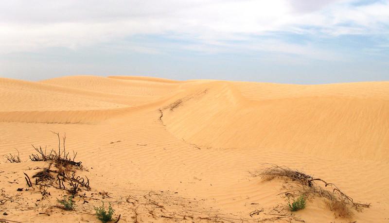 Dunes Ripples across dune face.jpg
