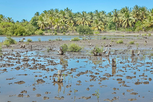Divers - La mangrove