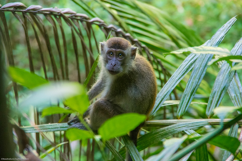 Monkey, Baku National Park