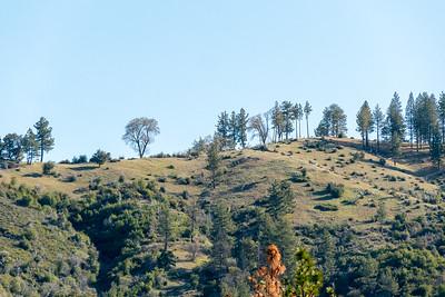 Ventana: Pine Valley - April 2021