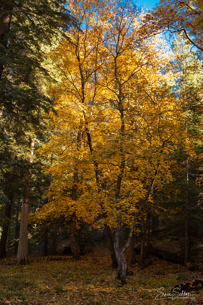 Mt Lemmon Colors 10-26-2018l-1526.jpg