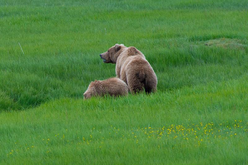 Alaska-9627.jpg