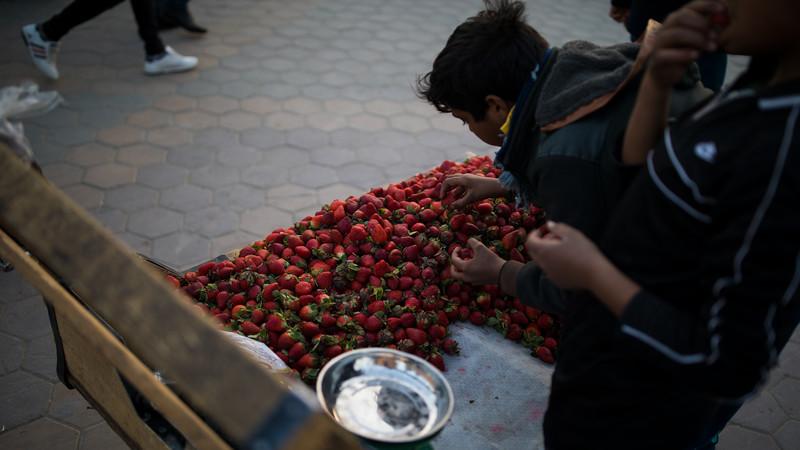 Boys selling fresh strawberries in Najaf.
