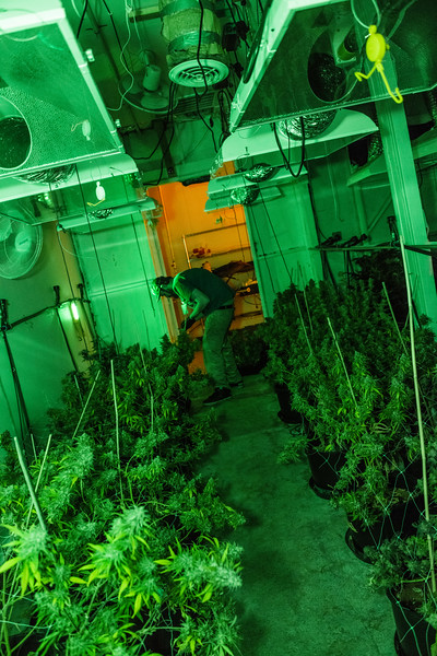 2.5.18 LC Harvest-30.jpg
