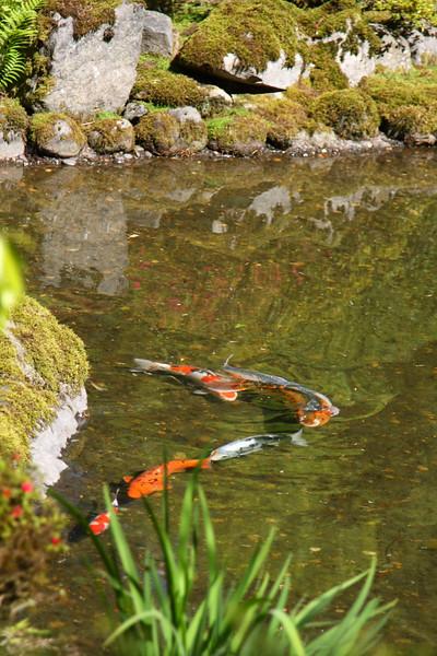 Portland Japanese Garden 6-3-11  1808.jpg