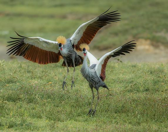 Tanzania Birds 2015