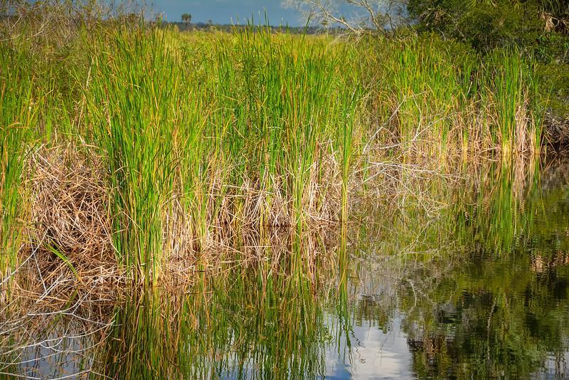 Everglades-40.jpg