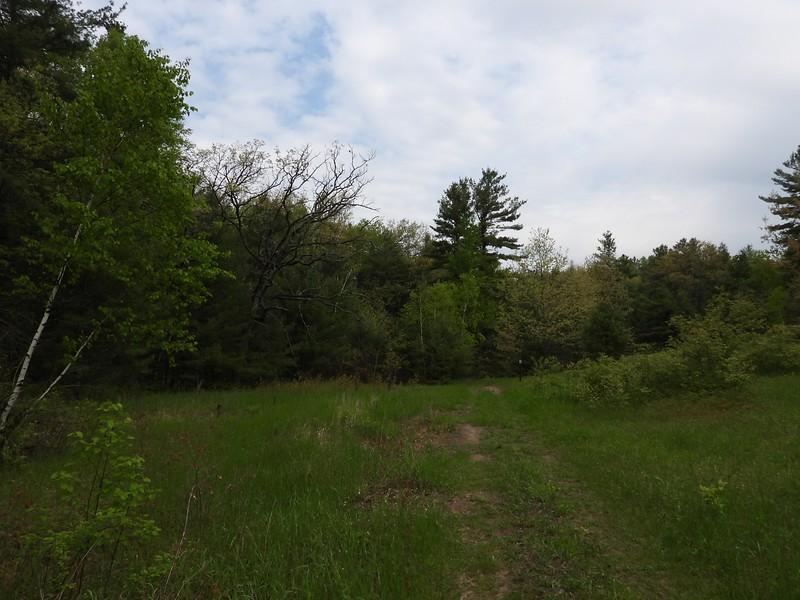 Trail at Hazel Bird Nature Reserve
