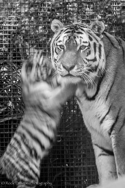 zoo_july_2012-17.jpg