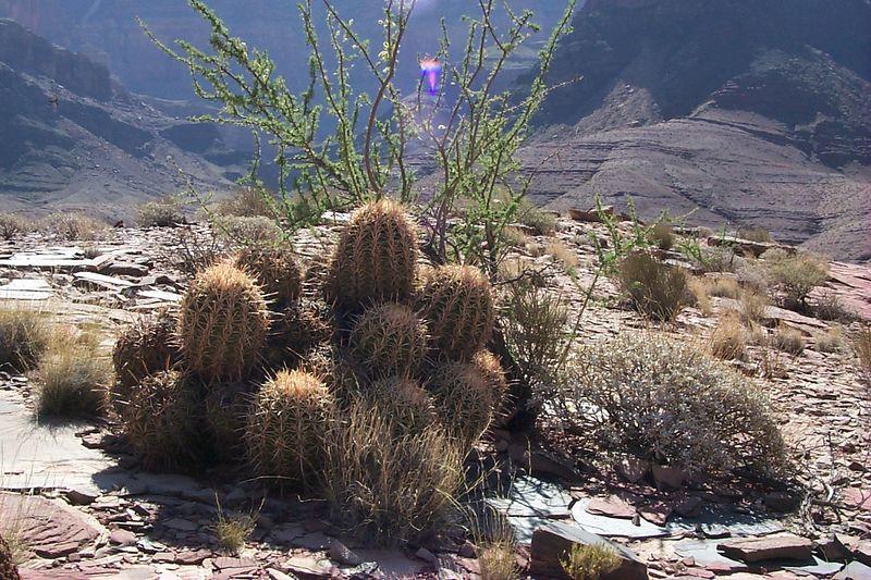 Cactus   (May 31, 1999, 10:13am)