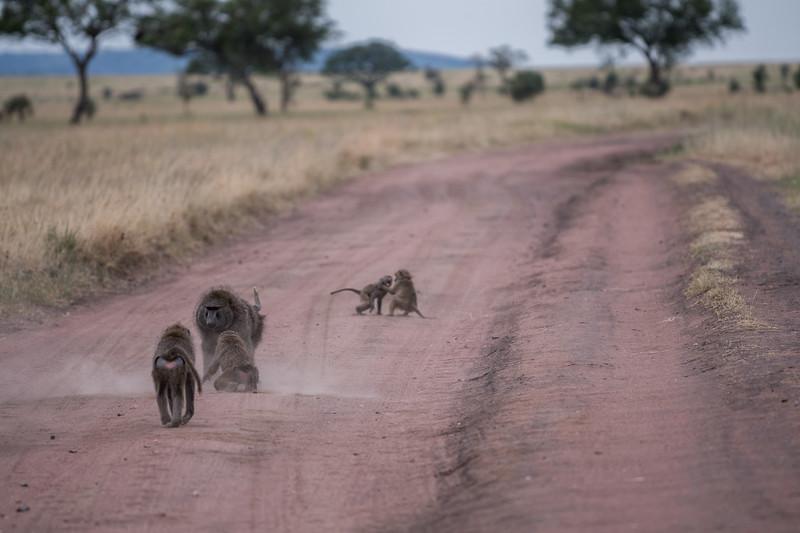 Tanzania_Feb_2018-1280.jpg